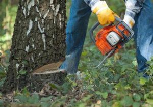 валка дерева на участке