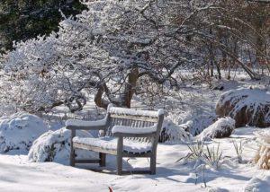 лиственные деревья зимой
